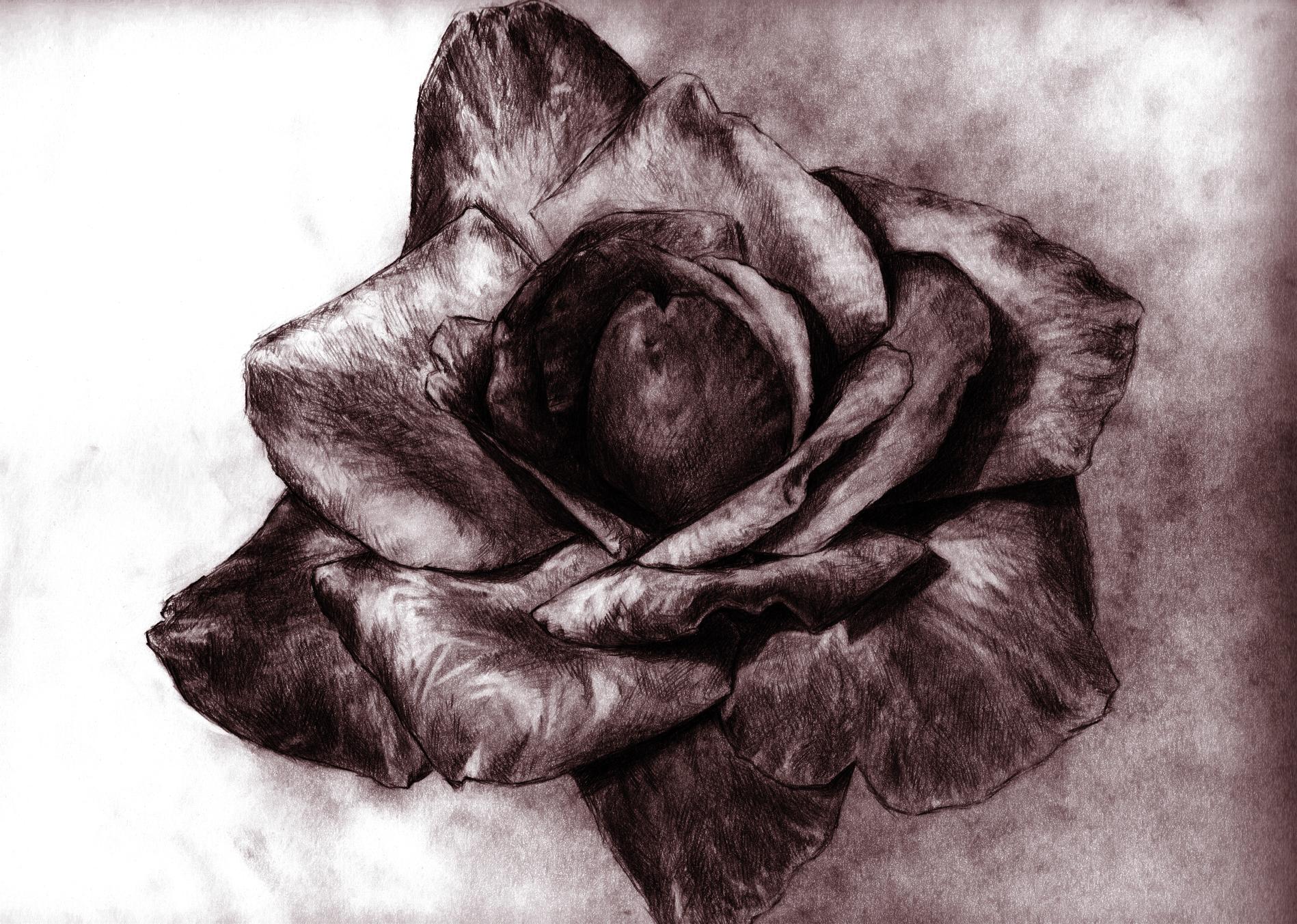 rose Taupe