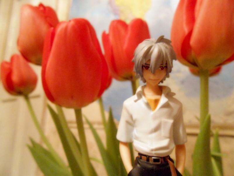Kaworu_tulips